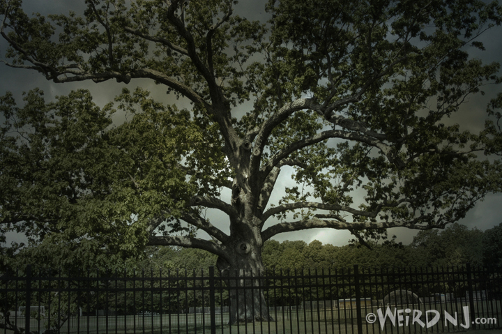 ScaryTree1