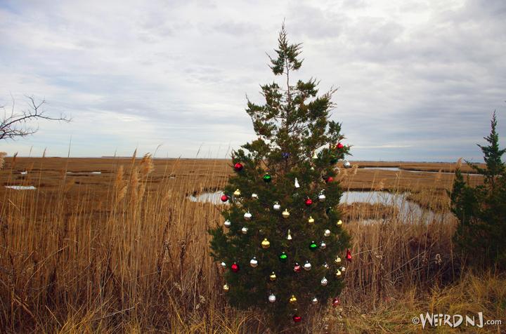Tuckerton Tree 2 sm