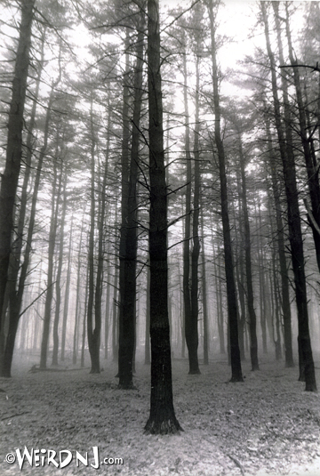 Enchanted Forest bw